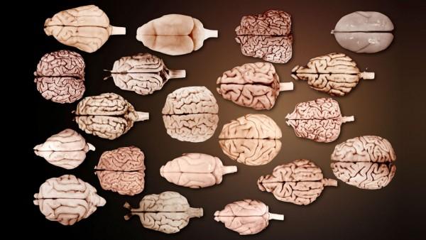 Seu cerebro e como um chumaco de papel