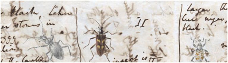 Breve histórico da entomologia A ciência por trás dos insetos 1