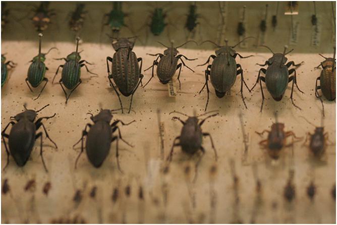 Breve histórico da entomologia A ciência por trás dos insetos