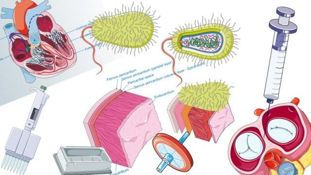 Banco de imagens e ilustrações científicas para apresentações