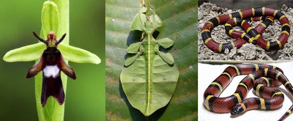 selecao-natural-exemplos-resumo1