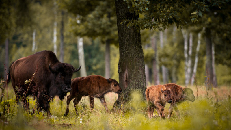 These ten tips will help you avoid bites. Poland Accused Of Ignoring Eu Ruling On Protected Forest Logging Euractiv Com