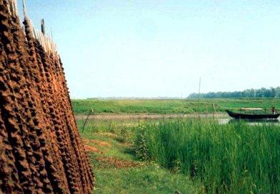 Pastoral scene in Bangladesh.