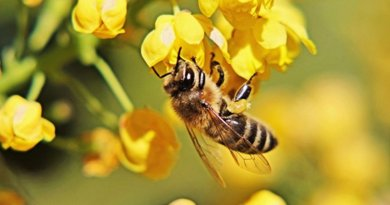 US Beekeepers Lost 33 Percent Of Bees In 2016-17