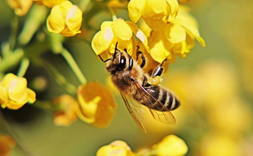 symbiosis relationship between bees and orchids