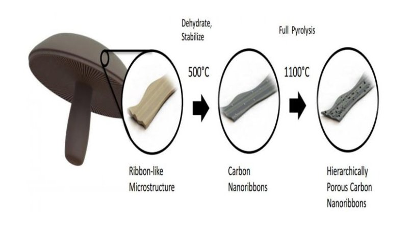 This is a diagram showing how mushrooms are turned into a material for battery anodes. Credit: UC Riverside