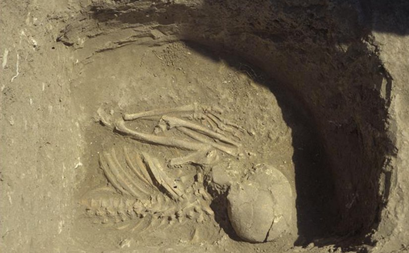 A major part of the results come from grave 6, Kumtepe, excavated in 1994. The picture shows the upper part of skeleton. Photo provided by Project Troia, thanks to Peter Jablonka.