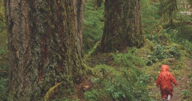 These old-growth forests in the Cascades may exceed 500 years old. Credit Matt Betts
