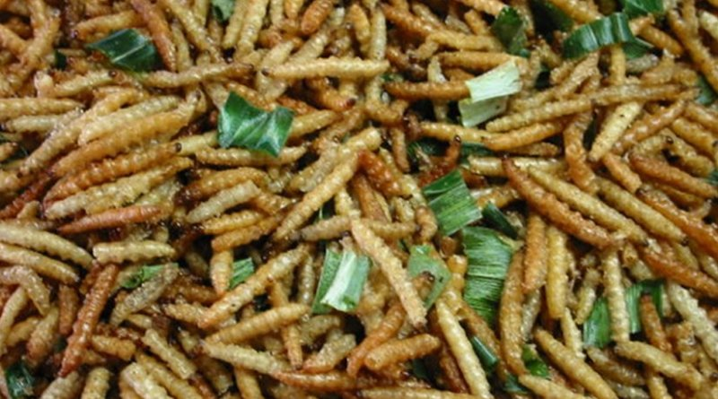 insects grub