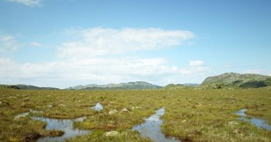 Crucial peatlands carbon-sink vulnerable to rising sea levels. Credit Alex Whittle / University of Exeter