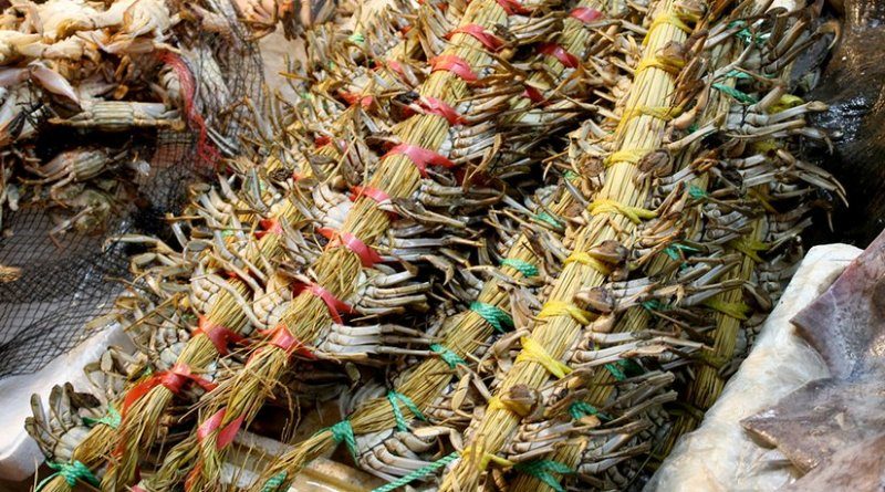 Live crab bundles at a market in Daejeon, South Korea. Photo by Luke Hoagland, Wikipedia Commons.