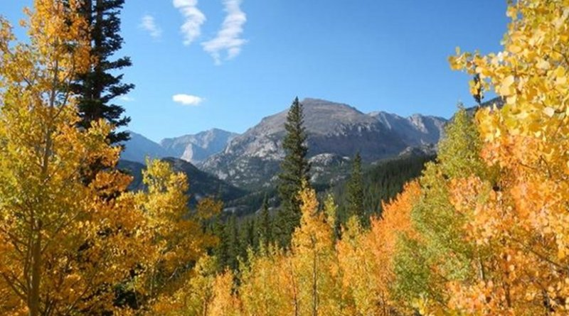 A sub-alpine forest in Colorado. Forests in the southwestern US are expected to be among the hardest-hit, according to the projections resulting from the study. Credit Sydne Record