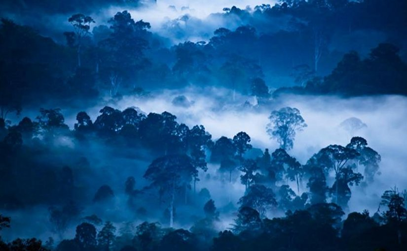 This is a photograph of 'Danum Valley (Borneo) at dawn. Credit: Liana Joseph