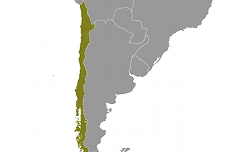 Location of Chile. Source: CIA World Factbook.