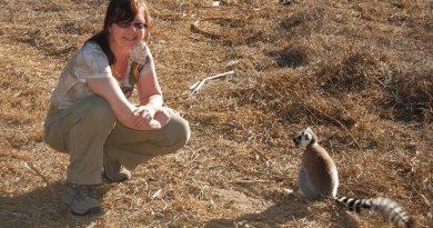 CU Boulder Professor Michelle Sauther, shown here, is part of a new study showing Madagascar's ring-tailed lemurs are declining significantly from habitat loss, hunting, and illegal capture. Credit Michelle Sauther