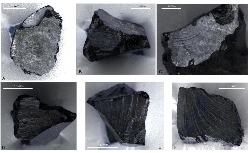RTI images of surface morphology on fragments from 1939,1010.251. Upper images (A, B and C) show concentric rings suggestive of working or worked imprints; lower images show natural fracture surface on the same fragments (D and E) and on a reference specimen of bitumen (F). Credit Burger et al (2016)