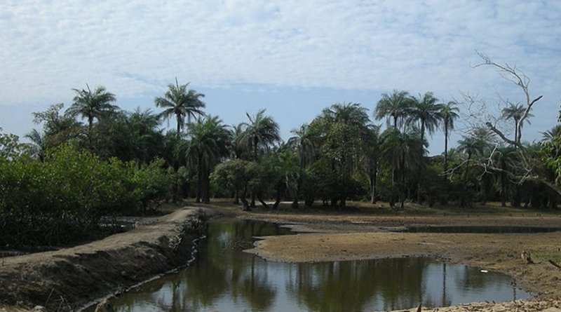 Rice paddy field in Africa. Photo by Ji-Elle, Wikipedia Commons.