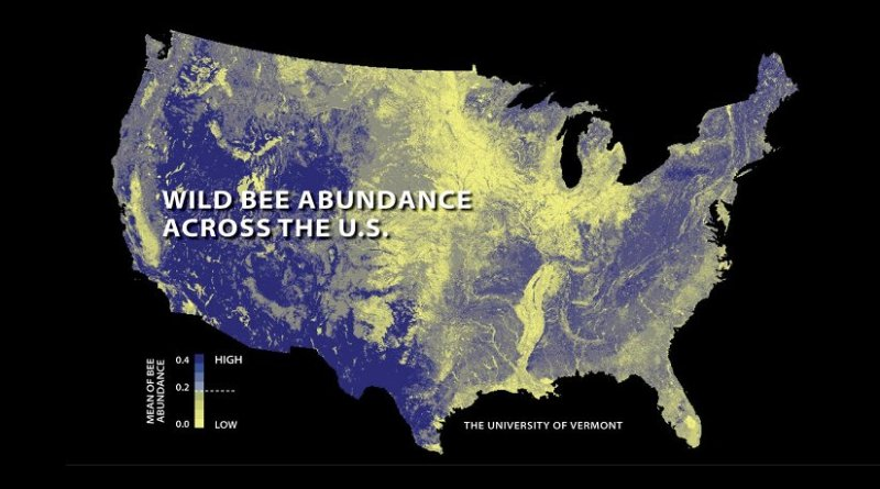The first national study to map US wild bees suggests they're disappearing in many of the country's most important farmlands. Relatively low abundances are shown here in yellow; higher abundances in blue. Credit PNAS