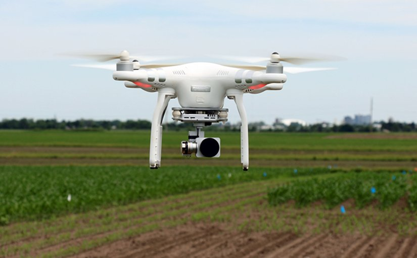 Drones are increasingly being used in agriculture. A new study demonstrates their benefits for soybean breeders.