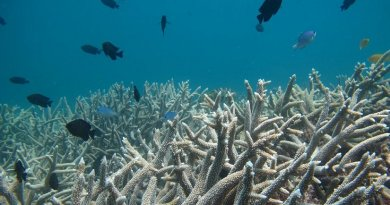 Coral is pictured. Credit Griffith University