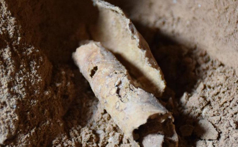 piece of parchment to be processed for writing, found rolled up in a jug, in a cave on the cliffs west of Qumran excavated by Hebrew University archaeologists. Credit (Photo: Casey L. Olson and Oren Gutfeld)