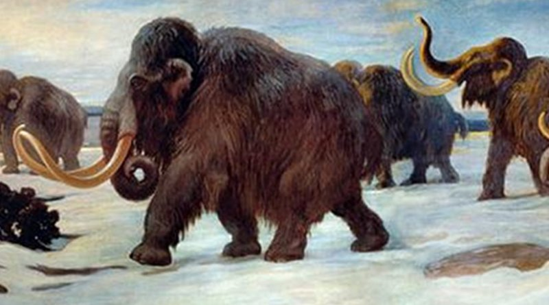 Wooly mammoths near the Somme River, AMNH mural. Credit Charles R. Knight, Public Domain, Wikimedia Commons