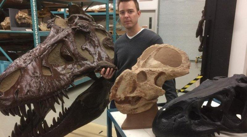 Dr. Jordan Mallon stands in the Canadian Museum of Nature's collections among replicas of skulls of dinosaurs previously studied for sexual dimorphism: Tyrannosaurus rex (large skull), Allosaurus fragilis (black skull), Protoceratops andrewsi and Stegoceras validum (in his hand). Credit Dan Smythe © Canadian Museum of Nature