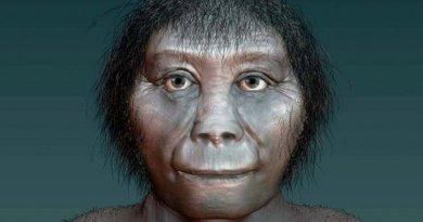 This is an artists impression of Homo floresiensis. Credit Katrina Kenny, SA Museum