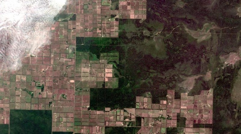 This is an image from the European Space Agency's Sentinel 2 satellite shows large areas of deforestation caused by the expansion of livestock agriculture in Paraguay's western region. Credit European Space Agency