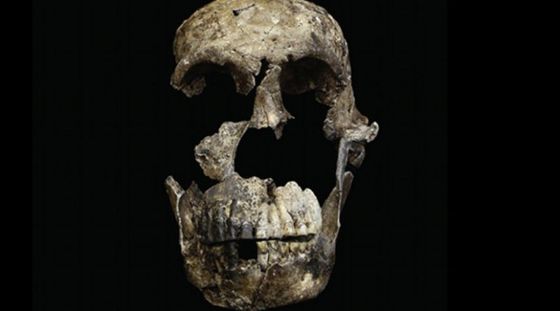 """""""Neo"""" skull of Homo naledi from the Lesedi Chamber is shown. Credit Photo by John Hawks/University of Wisconsin-Madison"""