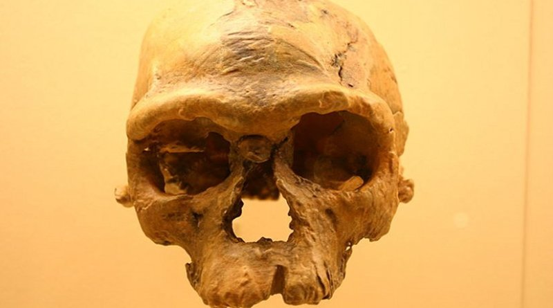 Jebel Irhoud 1. Homo Sapiens. Photo taken at the David H. Koch Hall of Human Origins at the Smithsonian Natural History Museum by Ryan Somma, Wikipedia Commons.
