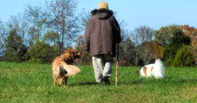 An elderly person walking with dogs.