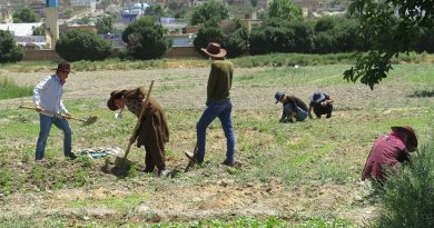Working on a permaculture Plot at Kabul University