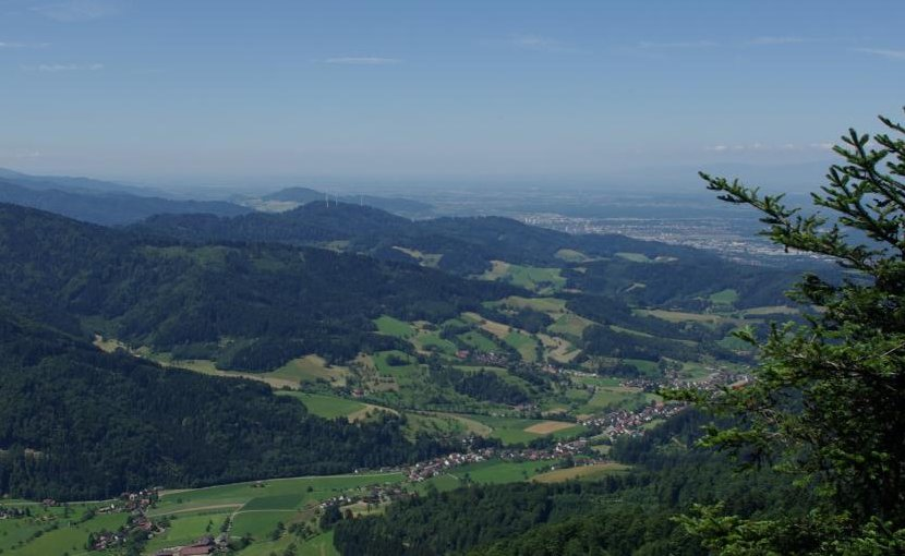 Like many areas in Central Europe, large parts of the Black Forest are covered by spruce forests. These are particularly susceptible to climate change. Credit Photo: Jürgen Bauhus