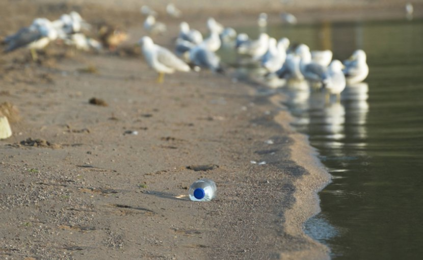 pollution beach plastic seagulls ocean