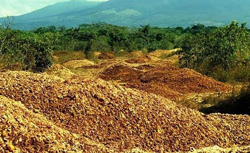 An area covered in orange peels in the 1990s turned into a lush forest nearly 20 years later. The story showcases the unique power of agricultural waste to not only regenerate a forest but also to sequester a significant amount of carbon at no cost. Credit Photos courtesy of Daniel Janzen and Winnie Hallwachs