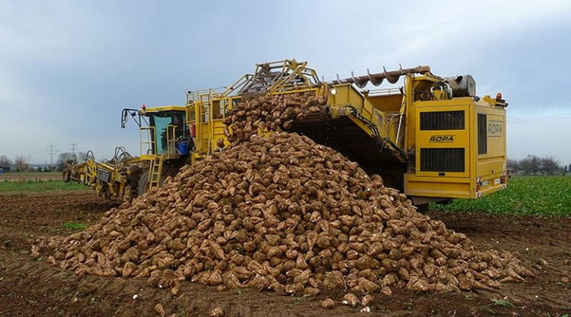 A sugar beet harvest in Germany. Photo by 4028mdk09, Wikipedia Commons.