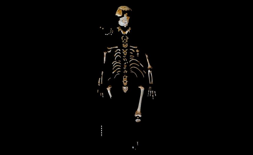 Skeleton of the Neanderthal boy recovered from the El Sidrón cave (Asturias, Spain). Credit Paleoanthropology Group MNCN-CSIC