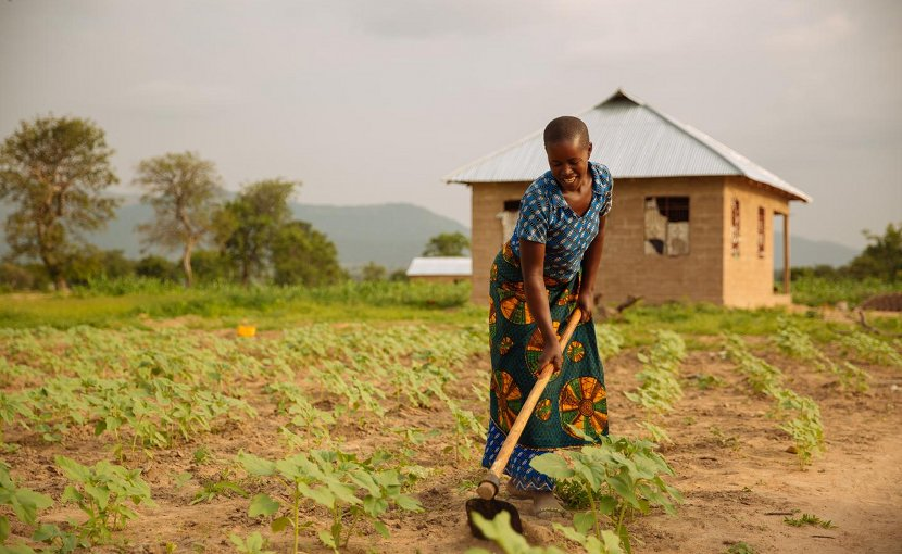 A study of nearly 2,000 smallholder farms in Africa and Asia found that climate context mattered in determining the most effective response to endemic food insecurity. Credit Mitchell Maher/International Food Policy Institute
