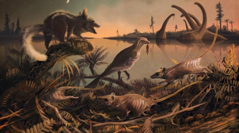 This is a reconstruction of the small, rat-like creatures that lived 145 million years ago in the shadow of the dinosaurs. Credit Dr Mark Witton, palaeo-artist, University of Portsmouth