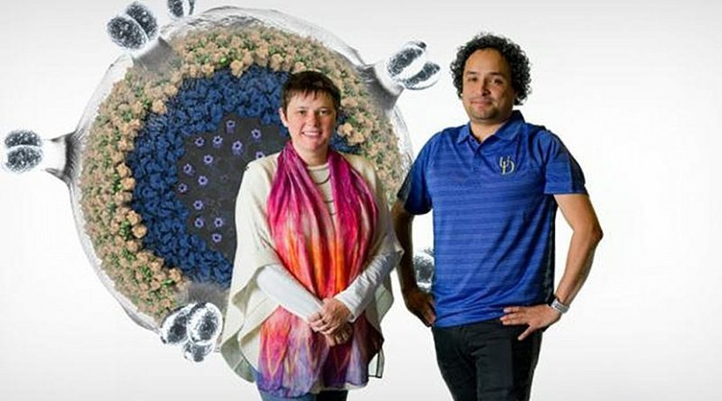 Tatyana Polenova and Juan Perilla, professors in the Department of Chemistry and Biochemistry at the University of Delaware, with a computer-generated model of HIV, the virus that causes AIDS. Credit University of Delaware/ Evan Krape and Jeffrey Chase