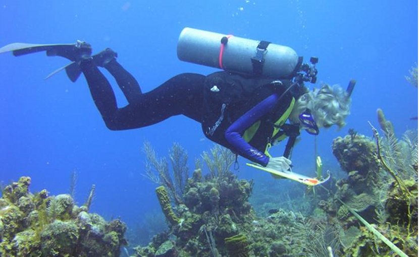"""By measuring ocean health in the same way at sites across the Caribbean, it's possible to understand where coastal environments are the most stressed out. """"If people get their act together very soon, there is still hope of reversing some of these changes,"""" said Rachel Collin, director of the Bocas del Toro Research Station at the Smithsonian Tropical Research Institute, one of the participating marine-monitoring stations. Credit Karen Koltes"""