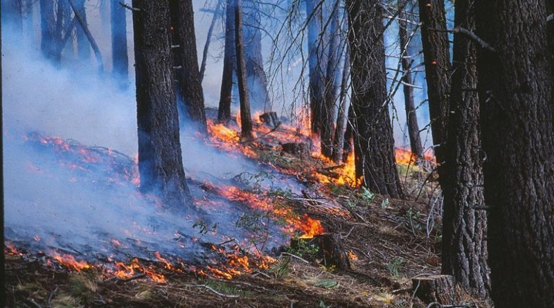 Burning undergrowth in forest. Credit Alan Taylor, Penn State