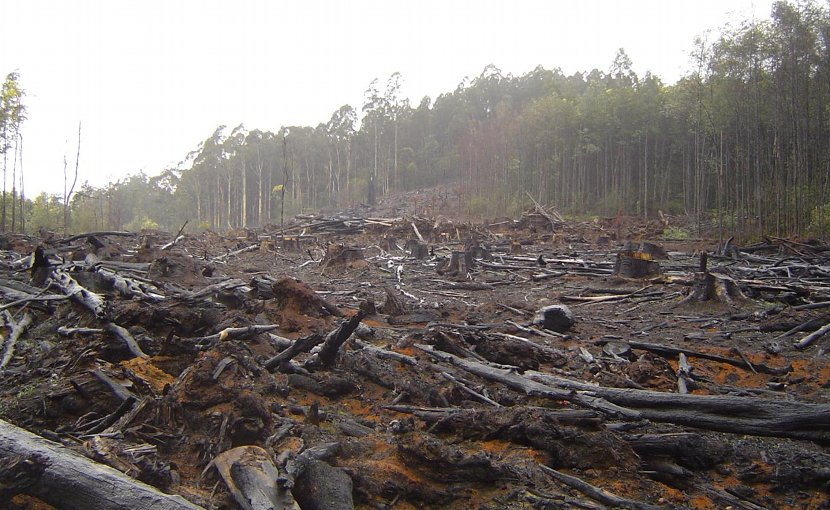 This is deforestation in Australia's Toolangi Park. Credit crustmania / Flickr