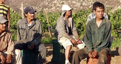 Migrant grape pickers. Photo by Tomas Castelazo, Wikimedia Commons.