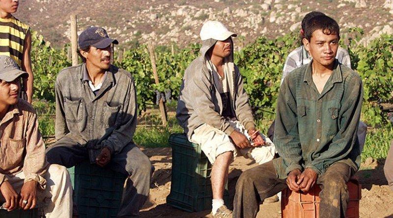 Migrant grape pickers. Photo by Tomas Castelazo, Wikimedia Commons.
