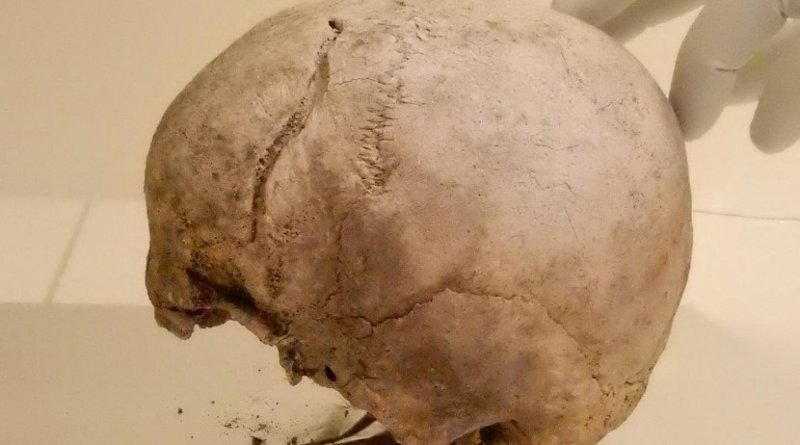 Skull included in this study from Ölsund, Hälsingland, Sweden, dating to around 2,300 BCE, in the ancient DNA laboratory at the Max Planck Institute for the Science of Human History. Credit Alissa Mittnik