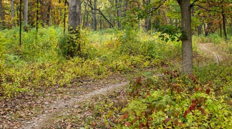 In a recent study, Argonne researchers helped determine the rate at which reforested and undisturbed forest soils absorb carbon from the atmosphere. They found that in the next 100 years, already existing reforestation in the country could help topsoil absorb an additional 2 billion tons of carbon. Credit Image by Argonne National Laboratory.