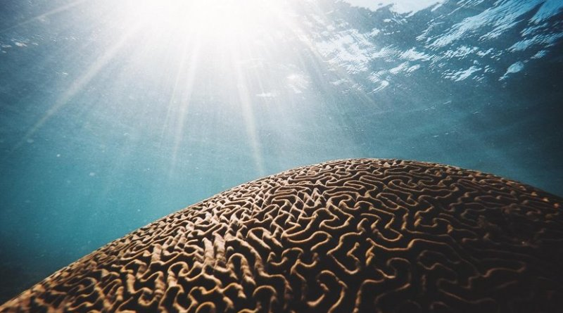 The increasing number, intensity and duration of marine heatwaves is likely to have a profound impact on ocean ecosystems and the industries, like fisheries and tourism, that depend on them. Credit Photo by Daniel Hjalmarsson (Unsplash.com)