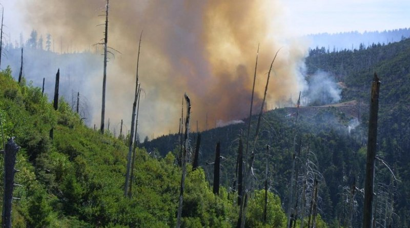 The 2002 Biscuit Fire reburns the area of the 1987 Silver fire. Credit Thomas Link